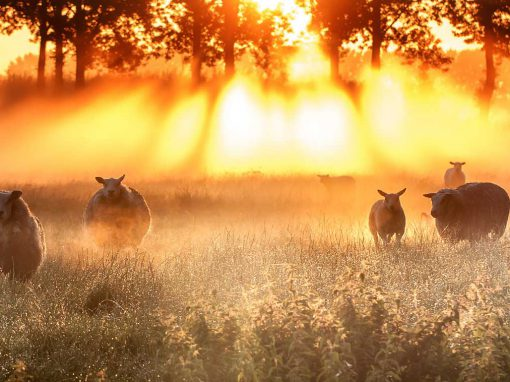 Ondersteuning van agrariërs en agrarische (natuur)verenigingen in Amstel-, Gooi en Vechtstreek